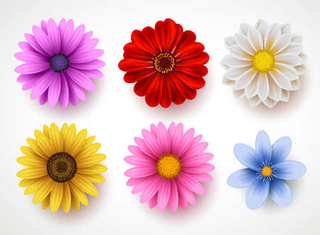 Spring flowers colorful vector set isolated in white background. Collection of daisy and sunflowers with various colors for spring season as graphic elements and decorations. Vector illustration. Reklamní fotografie - 94259267
