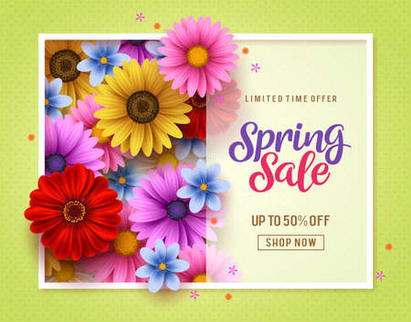 Spring sale vector banner template with colorful chrysanthemum and daisy flowers elements in background and spring seasonal store promotion text in white frame. Illusztráció