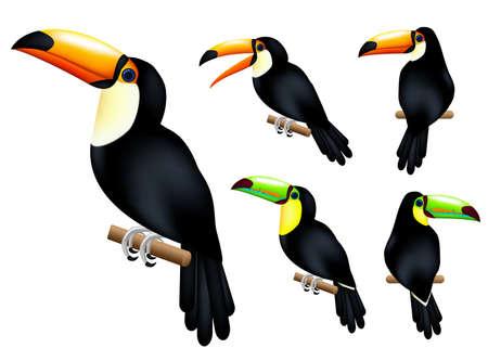 Toucan 3D Realistische Vector Mesh Set Tropisch dier met verschillende poses in geïsoleerde witte achtergrond. vectorillustratie Vector Illustratie