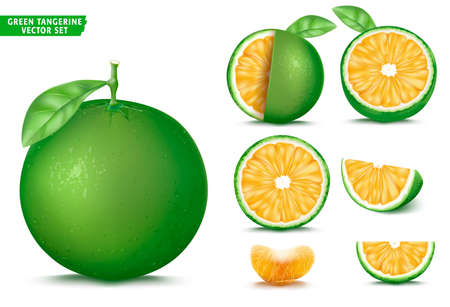 Green Tangerine Sour Orange Fruit Ripe Realistic 3D Vector Food Set. Whole Half and Sliced Version In Isolated White Background