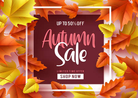 Autumn sale vector banner design. Autumn sale discount text in a frame with orange and yellow maple leaves in white background for fall season shopping promotion.