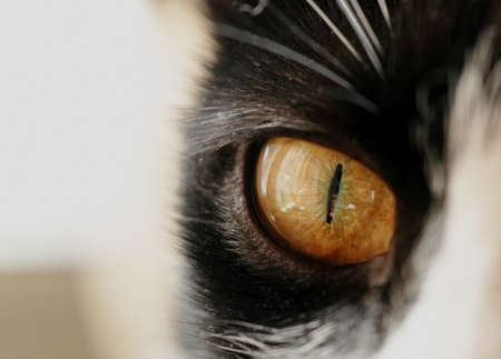 close up photo ot feline eye, soft focus