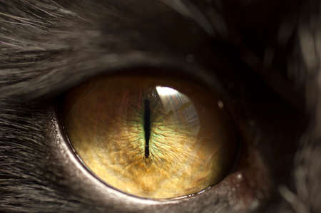 close   up: Macro shoot of black cat eye with reflection of window Stock Photo