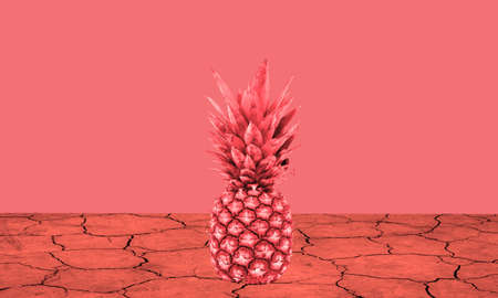 pineapple on a red dry earth and a red background