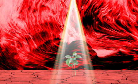 a young plant grows from a dry earth under a light beam, red dramatic background
