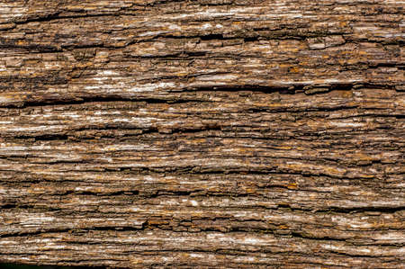 photo of texture of old oak tree bark, Natural background