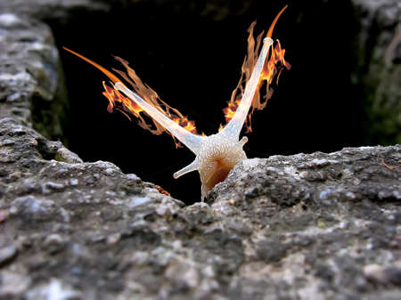 a snail with flames on its horns comes out of a hole in the stone