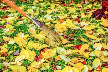 Colorful Fall leaves with rake in a park. Stock Photo