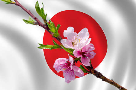 Branch Of Peach Flowers on the Japanese flag background