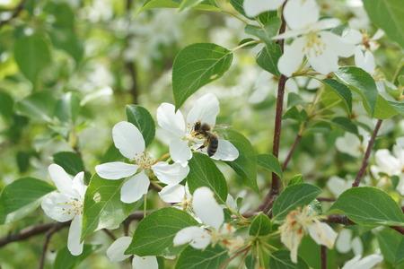 floret: Bee on floret