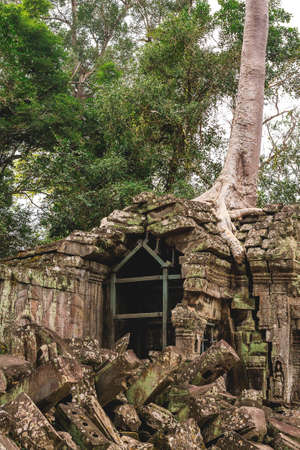 ta: Tower, huge trees and galleries at sunny morning in Ta Prohm Temple, Siem Reap, Cambodia.