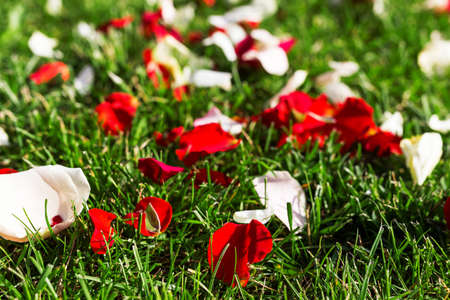 Orange rose petals on the green grass.