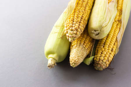 Fresh sweet corn on cobs at black rustic table. Close up