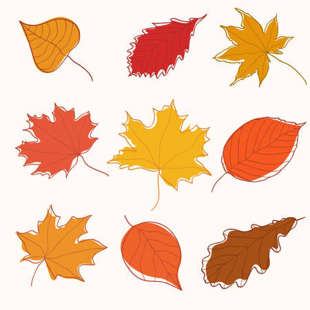Collection of hand-drawn autumn leaves 矢量图像