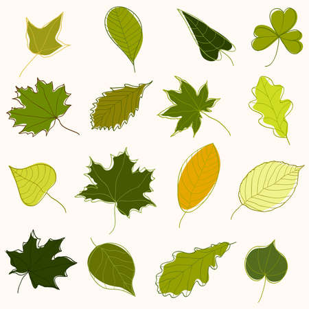 Collection of hand-drawn green leaves of various trees Illustration