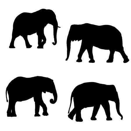 siluetas de elefantes: Siluetas negras de cuatro elefantes en un fondo blanco Vectores