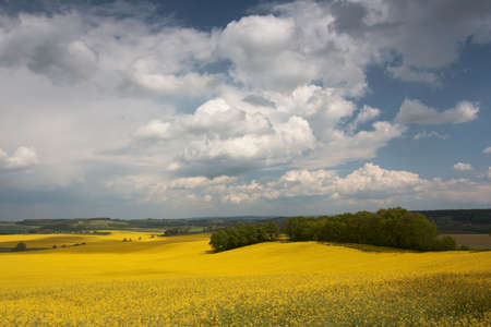 cole: Landscape with cole  Stock Photo