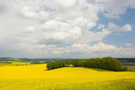 Colorful blossom field of colza with beautiful sky photo