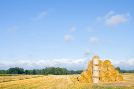 big round bales of straw in the meadow  Polish countryside landscape in summer photo