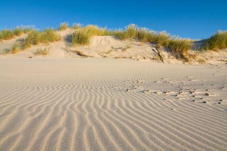Dune on Beach at Sunset