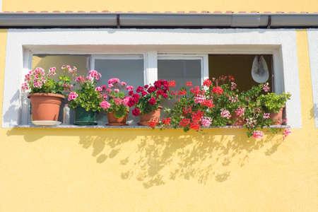 Window with Flowers, Dalmatia, Zadar, Croatia photo