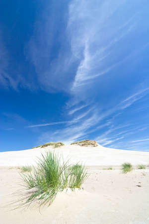 dunes in a  Slowinski National Park, Poland photo