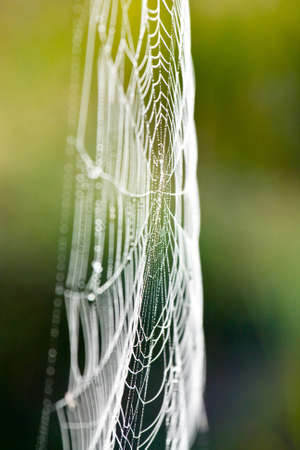 The spider web (cobweb) closeup background. photo