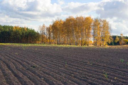 Autumn agricultural landscape photo