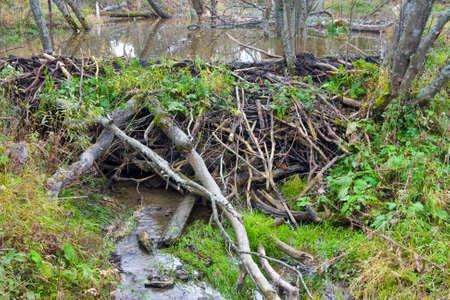 redirection: Beaver Dam on river
