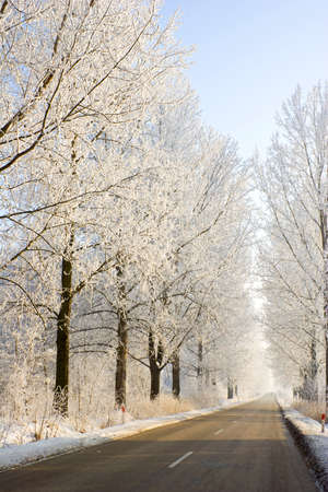 Winter frost in the wild forest  Deep wilderness nature  photo