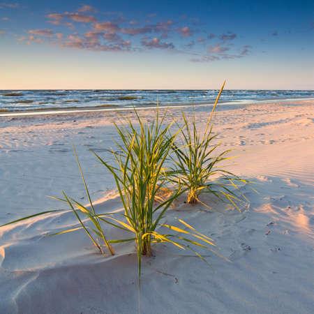 duna: puesta de sol en la playa Foto de archivo