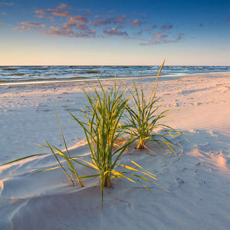 sunset on the beach Stock Photo - 16624268