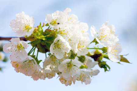 increase fruit: flowers to apple trees