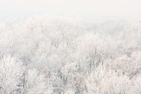hoar: Frosted trees against a blue sky on a sunny morning.  Stock Photo