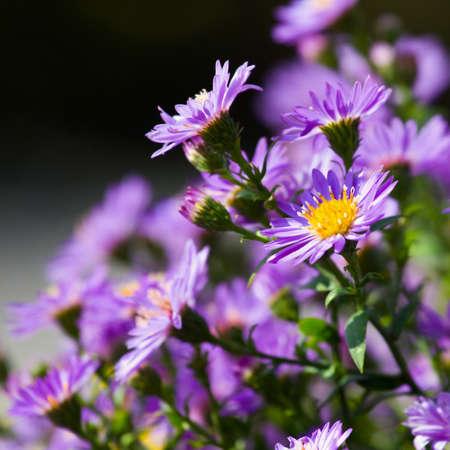 purple flowers Stock Photo - 17535098
