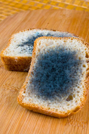 mold: moldy bread on a chopping board