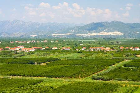 agricultural area: Agricultural area in Neretva river delta in Croatia  Stock Photo