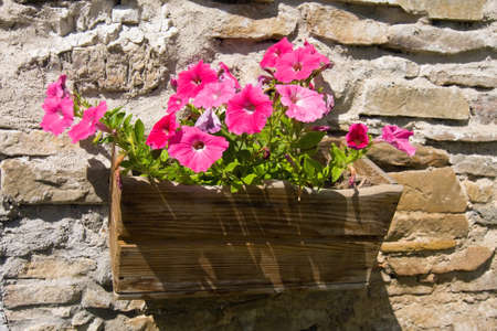 living idyll: Flowers in flowerpot on wall