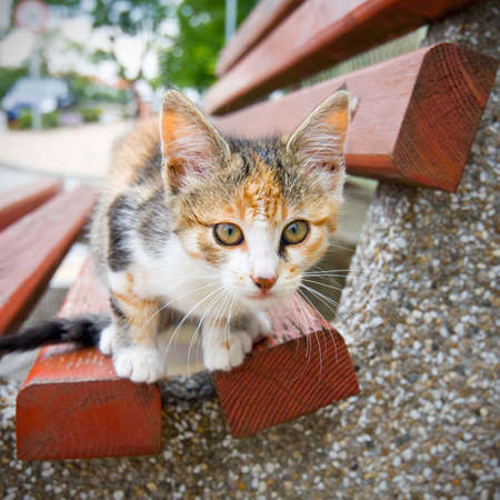 Small Kitty on the bench photo