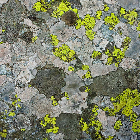 lichens as background photo