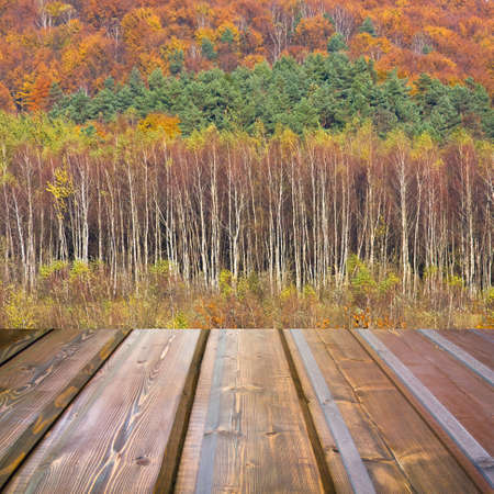 Beautiful sunlight in the autumn forest and wood planks floor  photo