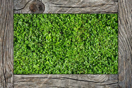 concept of grass with wood Stock Photo - 23417785