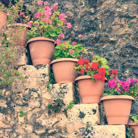 Flowers in the pots, vintage look photo