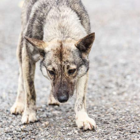 furious dog photo