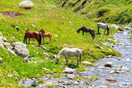 Horse herd on the pasture in the mountains photo