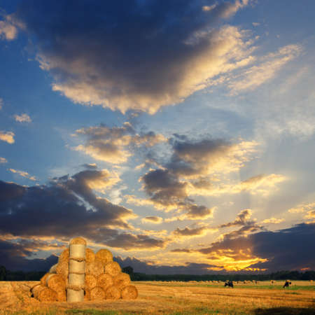 big round bales of straw in the meadow. Polish countryside landscape in summer, vintage look photo