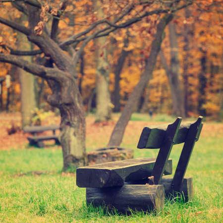 秋の公園、ビンテージの外観でベンチ