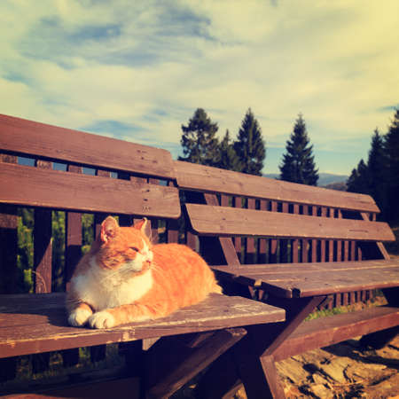 Ginger cat lying on a bench photo