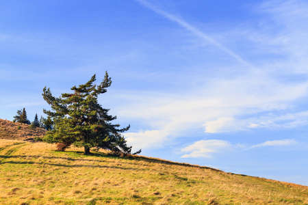 Lonely tree  in the mountains photo