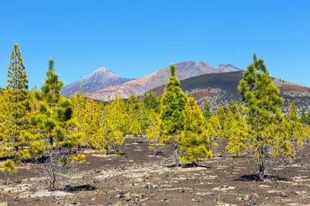 viejo: Pico Viejo and El Teide, El Teide National Park, Tenerife, Canary Islands, Spain Stock Photo